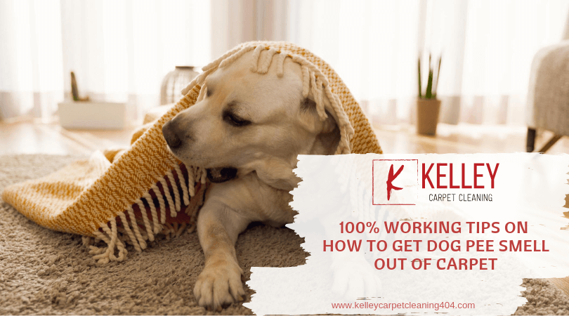 100 Working Tips On How To Get Dog Pee Smell Out Of Carpet
